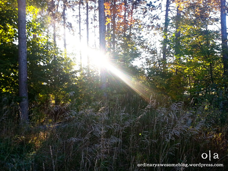 Fringe of Frost - Ordinary|Awesome blog
